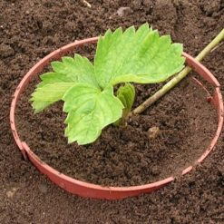 tuin plant