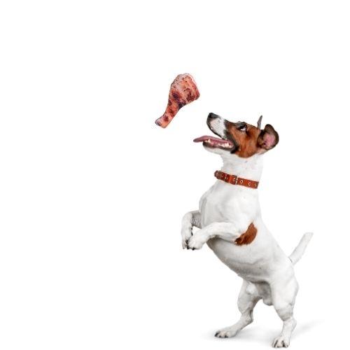 Orange85 Honden speelgoed etenswaar 4 stuks