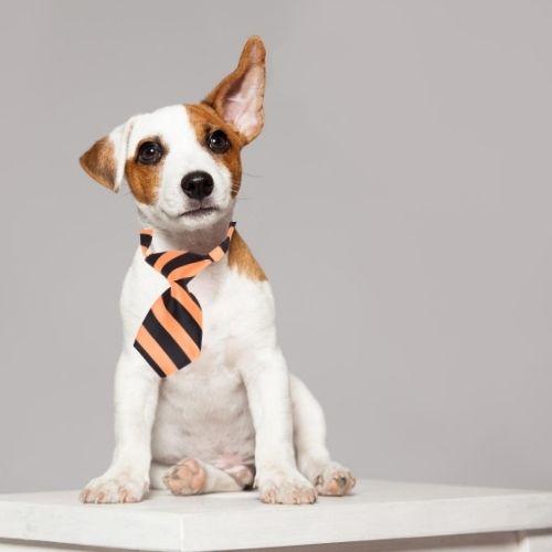 Orange85 Hondenhalsband met Das Oranje 3 stuks
