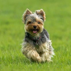 hondenspeelgoed bal hond