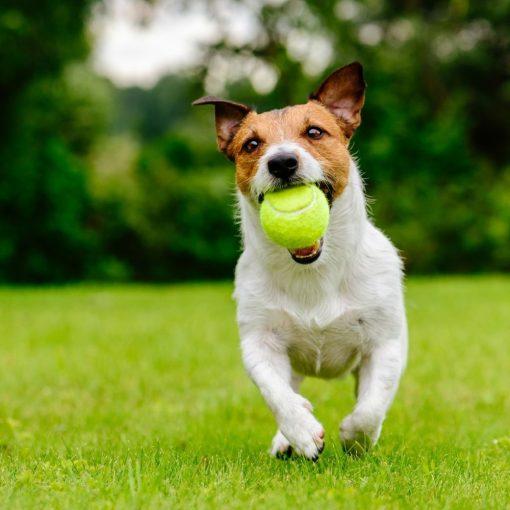 Tennisballen voor hond sfeerbeeld