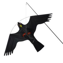 Vogelverjager kite hawk vooraanzicht