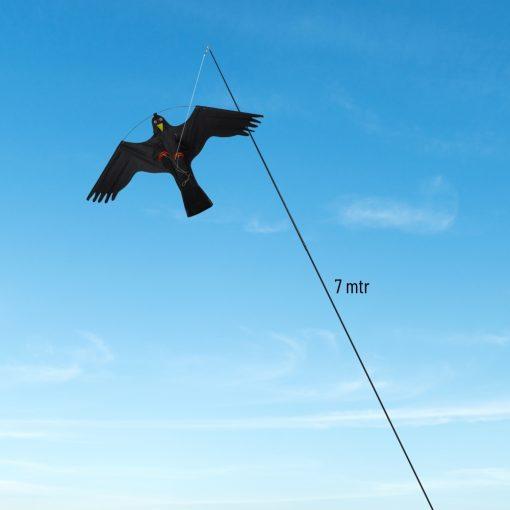 Vogelverjager kite hawk sfeerbeeld